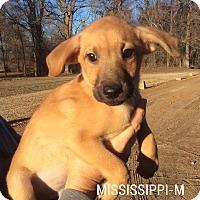 Adopt A Pet :: Mississippi - Albany, NY