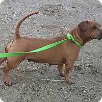 Adopt A Pet :: Ruthie - Macomb, IL