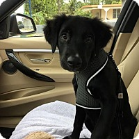Adopt A Pet :: Muneco - New York, NY