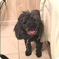 Adopt A Pet :: Pudley - Scottsdale, AZ