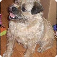 Adopt A Pet :: Buzz - Rigaud, QC