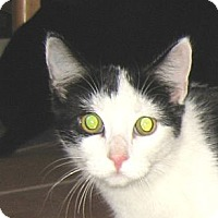 Adopt A Pet :: JOHN - 2013 - Hamilton, NJ