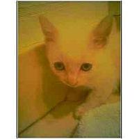 Adopt A Pet :: Cutiepie - Owasso, OK
