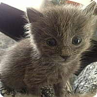 Adopt A Pet :: Storm - Shreveport, LA
