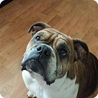 Adopt A Pet :: Jorga - Chicago, IL