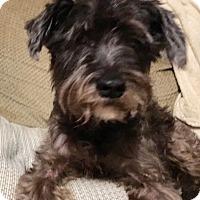 Adopt A Pet :: Jack - Laurel, MD
