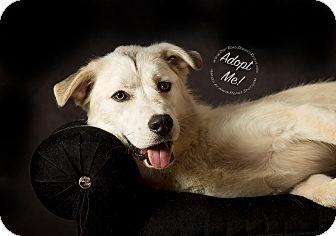 Husky/Great Pyrenees Mix Dog for adoption in Gillsville, Georgia - Nanuk
