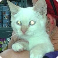 Adopt A Pet :: Storm - Whittier, CA