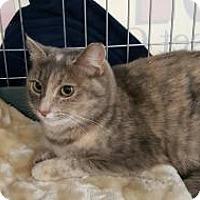 Adopt A Pet :: Sissy - Raritan, NJ