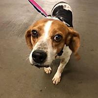 Adopt A Pet :: Faline (Murphie) - cicero, NY