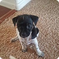 Adopt A Pet :: Lenah - Westminster, CO