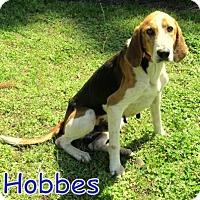 Adopt A Pet :: Hobbes - Georgetown, SC