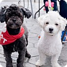 Adopt A Pet :: Bobby and Barney