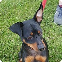 Adopt A Pet :: Sancho - Sacramento, CA