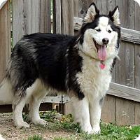 Adopt A Pet :: LANEY - Joplin, MO