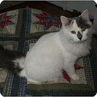 Adopt A Pet :: Jack - Reston, VA