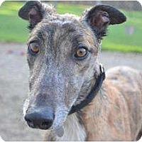 Adopt A Pet :: Pyro (RC Pyro) - Chagrin Falls, OH