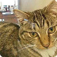 Adopt A Pet :: Pretti Boy - Arlington, VA