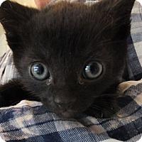 Adopt A Pet :: Charlie - Reston, VA