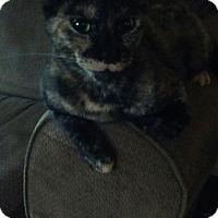 Adopt A Pet :: izzy - Ocala, FL