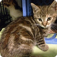 Adopt A Pet :: Gianna - East Brunswick, NJ