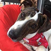 Adopt A Pet :: Turner - Sherman, CT