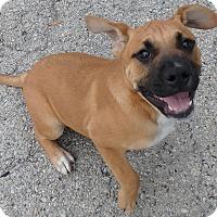 Adopt A Pet :: Beemer - Seguin, TX