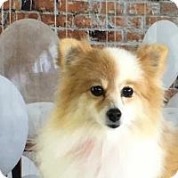 Adopt A Pet :: Heaven - Dallas, TX