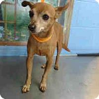 Adopt A Pet :: URGENT on 4/25 SAN BERNARDINO - San Bernardino, CA