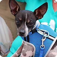 Adopt A Pet :: Teddy - Yuba City, CA