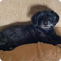 Adopt A Pet :: **ARWEN - Peralta, NM