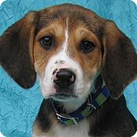 Adopt A Pet :: Bernie Warner-Smith - Cuba, NY