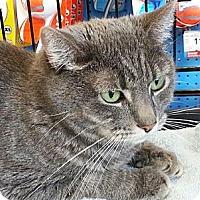 Adopt A Pet :: Brigette - Beverly Hills, CA