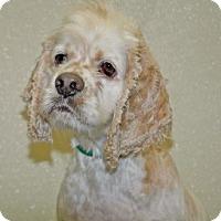 Adopt A Pet :: Tramp - Port Washington, NY