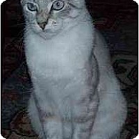 Adopt A Pet :: Gretta - Portland, OR