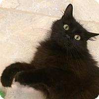 Adopt A Pet :: Luna - Colmar, PA