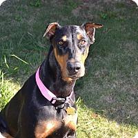 Adopt A Pet :: Jada - Fort Worth, TX