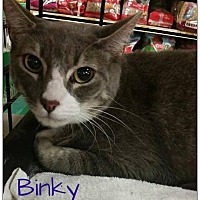 Adopt A Pet :: Binky - Hazlet, NJ