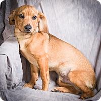 Adopt A Pet :: LUCAS - Anna, IL