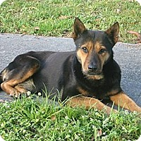 Adopt A Pet :: Kay - hollywood, FL