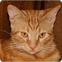 Adopt A Pet :: Darla - Naples, FL