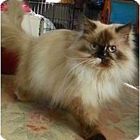 Adopt A Pet :: Flakey - Alexandria, VA