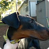 Adopt A Pet :: Marley - Allegan, MI
