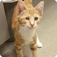 Adopt A Pet :: Jack Sparrow - Audubon, NJ