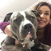 Adopt A Pet :: Berg - Los Angeles, CA