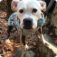 Adopt A Pet :: Birdy - Atlanta, GA