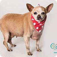 Adopt A Pet :: A664710 - Camarillo, CA