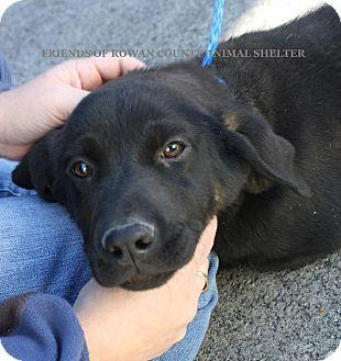 Hound (Unknown Type) Mix Puppy for adoption in Nanuet, New York - missy