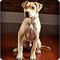 Adopt A Pet :: Little Guy - Owensboro, KY