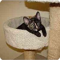 Adopt A Pet :: Trixie - Milwaukee, WI